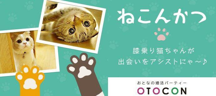 12/22 11時20分~ in 心斎橋 ネコカフェCat tail