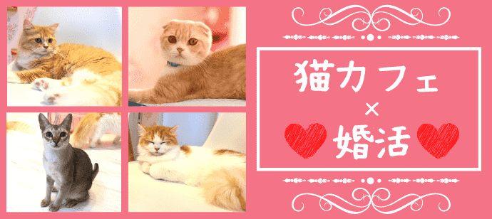 【猫カフェ婚活♪】3か月以内に恋人が欲しい★猫ちゃんと戯れながらまったり婚活