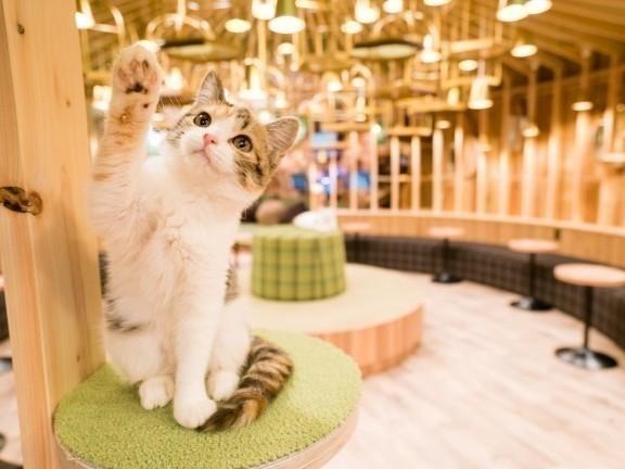 猫カフェ 街コン