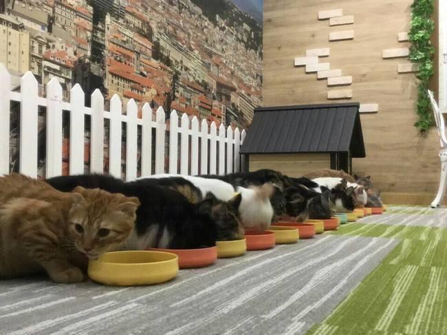 横浜 猫カフェ 趣味コンパ