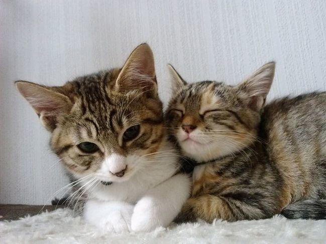 猫ちゃんに癒やされながら楽しく会話