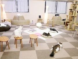 開催店舗Cat Cafe ねころび