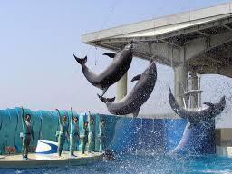 イルカのショーは必見!