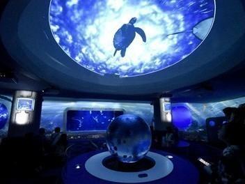 水族館内は幻想的な空間が広がります