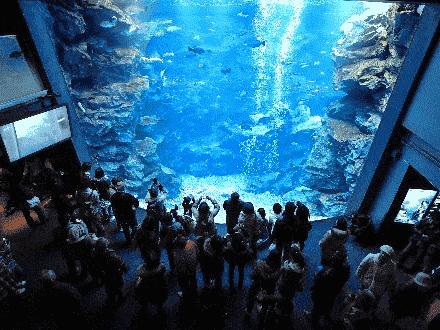 大きな水槽で泳ぐ魚たち