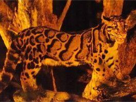 夜行性の動物に会える貴重な機会♪ | 横浜夏の夜の動物園