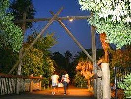 動物たちのアフター5を覗きに行こう! | 横浜夏の夜の動物園