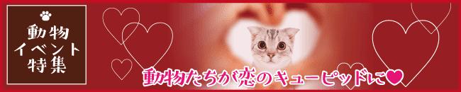 動物イベント特集