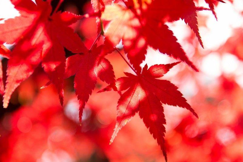 鮮やかな色どりと紅葉