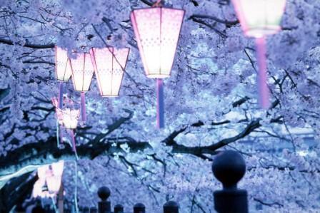 お花見 大岡川2