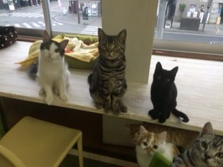 うちの猫たち7 (1)