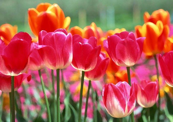 flower-back1474[1]