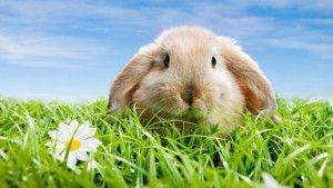 Cute-rabbit_1920x1080-300x169