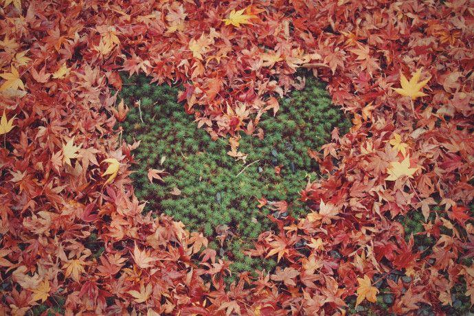 leaf_heart-compressor